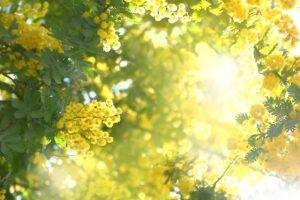 4月29日(水祝)春のイタリア語学習デー