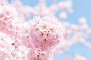春ですね!はじめよう美術イタリア語キャンペーン